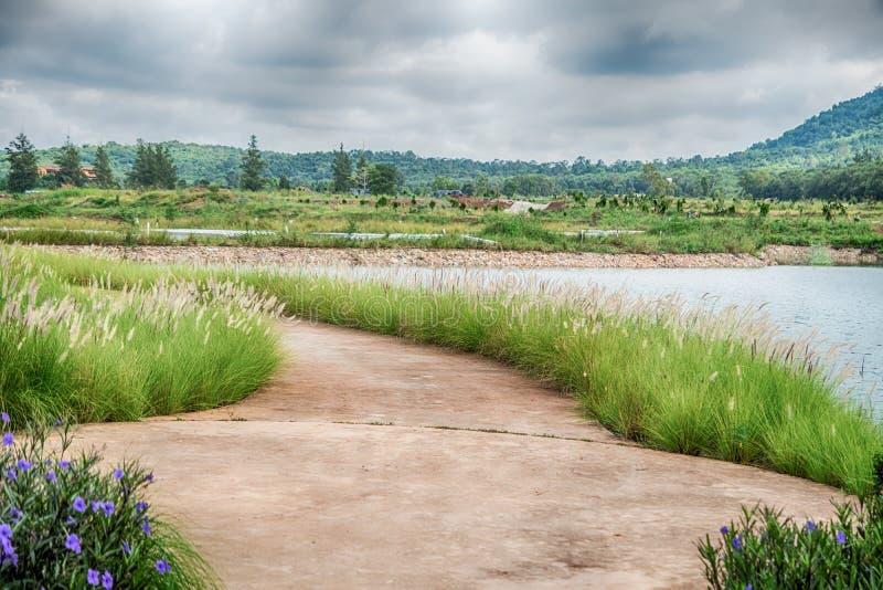 La bella vista di piccolo lago ha orlato dagli alberi verdi al Cl di autunno fotografia stock libera da diritti