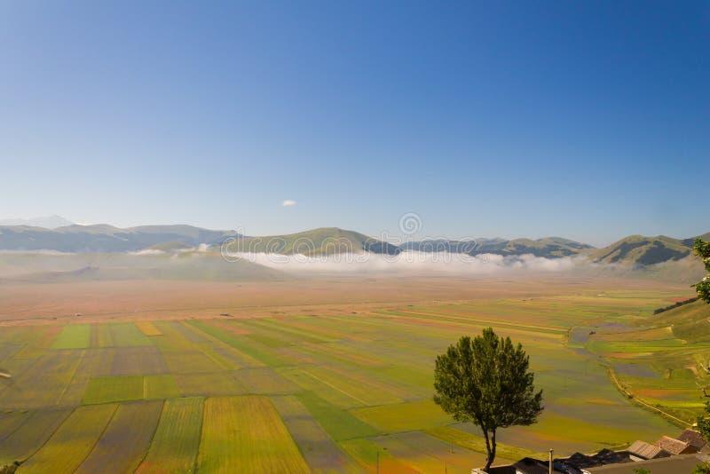 La bella vista di un albero isolato sopra il Castelluccio di Norcia Umbria immagini stock