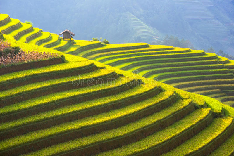 La belle couche de la montagne et la nature dans la terrasse de riz du Vietnam aménagent en parc photos stock