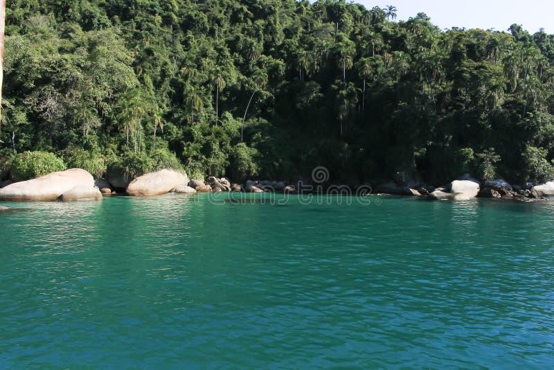 La belle eau verte et la végétation photos stock