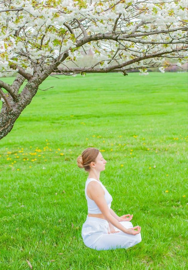 La belle femme pratique la s?ance de yoga dans la pose de Lotus pr?s de l'arbre de fleur images libres de droits