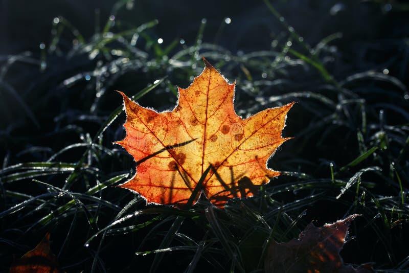 La belle feuille d'érable d'or lumineuse de fond naturel se trouve sur le Th images stock