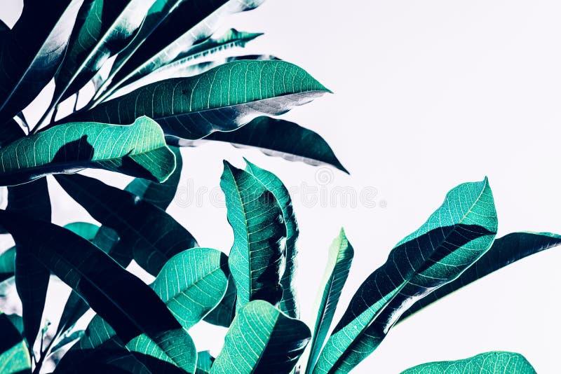 La belle feuille laisse des idées de milieux de modèle de texture image libre de droits