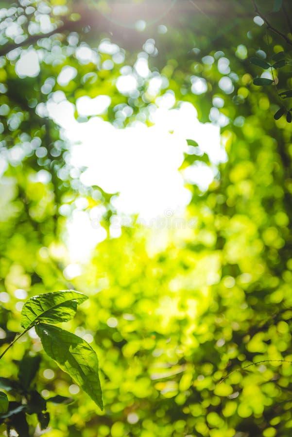 La belle feuille verte naturelle et le bokeh abstrait de tache floue allument le fond photo stock