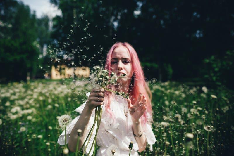 La belle fille avec les cheveux roses s'assied dans un domaine ?lev? avec des pissenlits pendant l'?t? images libres de droits
