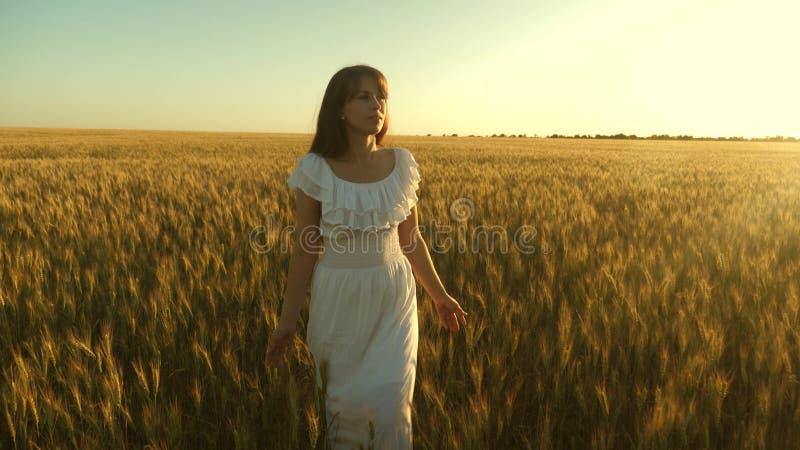 La belle fille marche ? travers un champ des oreilles m?res de bl? et de contacts du grain avec ses mains Mouvement lent Fonction photo libre de droits