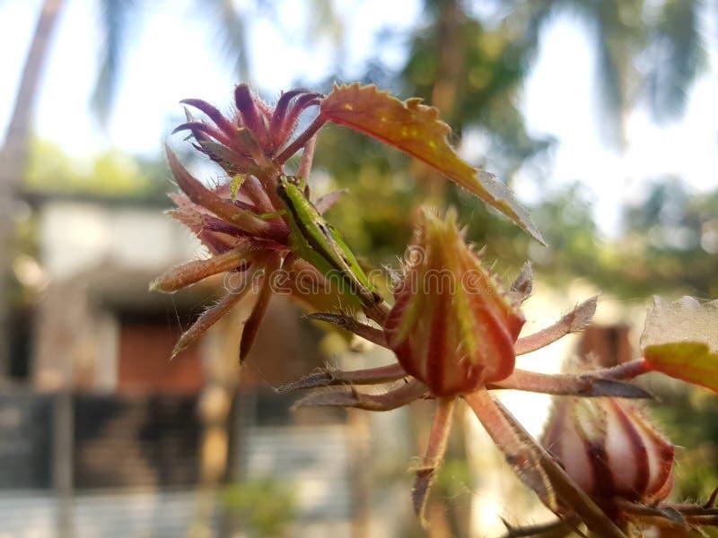 La belle fleur photo stock