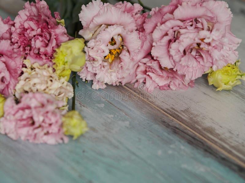 La belle fleur de ressort fleurit le fond, sur le fond en bois de turquoise bleue Printemps et concept de nature images libres de droits