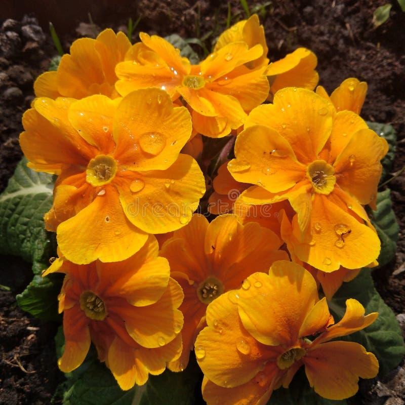 La belle fleur du ressort photographie stock