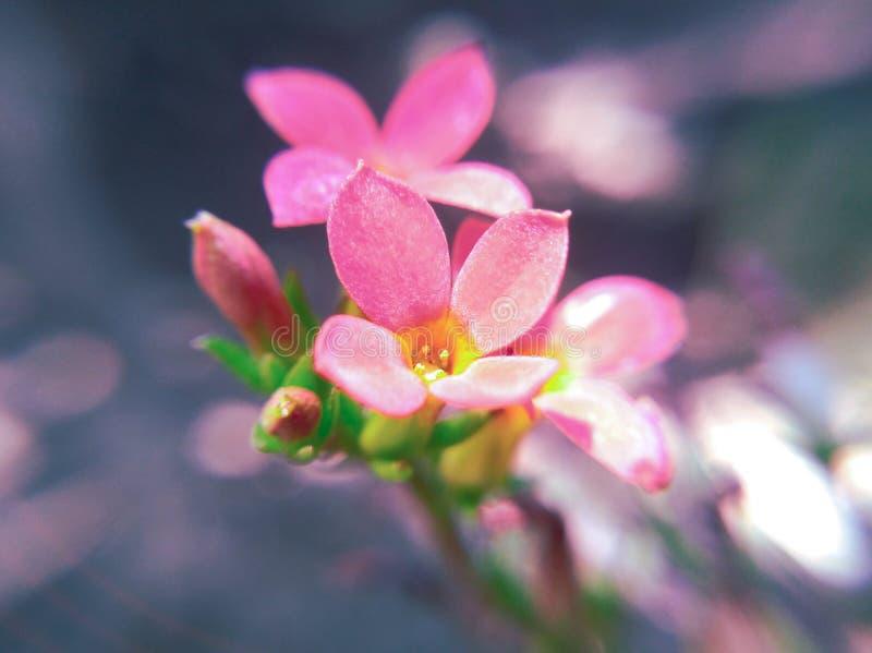 La belle fleur rouge d'orchidée semble belle image libre de droits