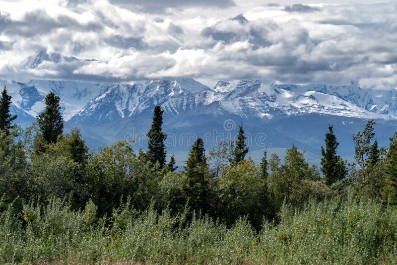 La belle forêt boréale le long de Richardson Highway montre le D image stock