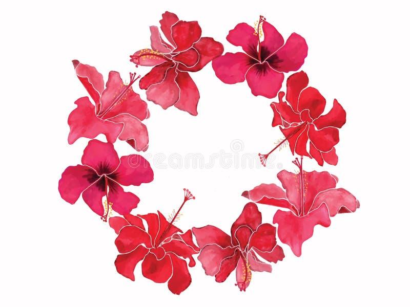 La belle guirlande d'aquarelle avec des fleurs fleurissent des ketmies illustration de vecteur