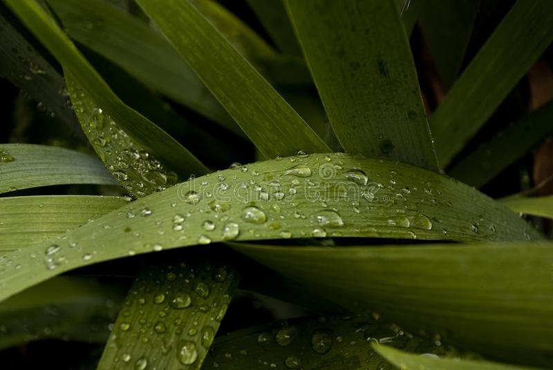 La belle herbe verte avec des baisses de scintillement de pluie aiment images stock