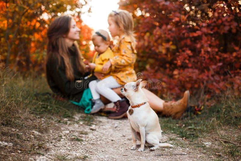 La belle jeune mère et sa petite la fille marchant en été se garent Femme et fille mignonne d'enfant passant le temps ensemble photos stock
