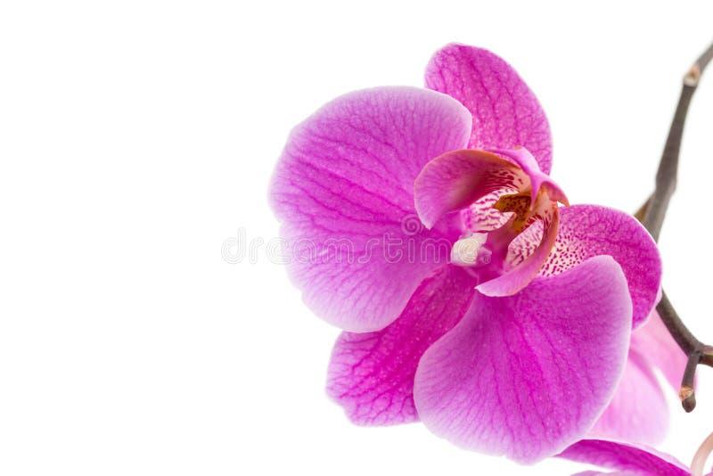 La belle maison violette fleurit des orchidées image libre de droits
