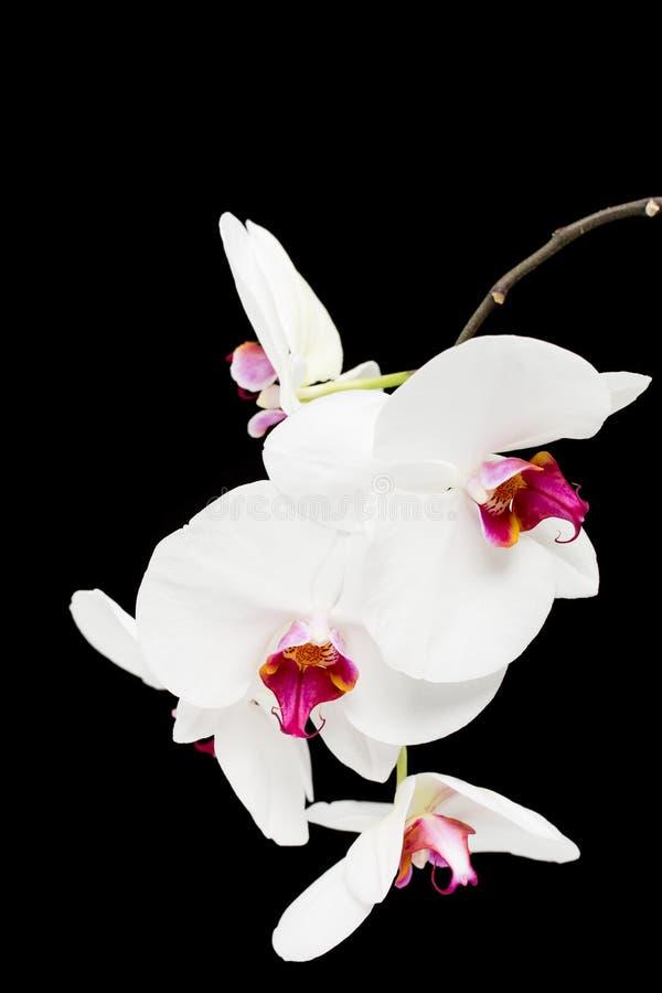 La belle maison violette fleurit des orchidées photos stock