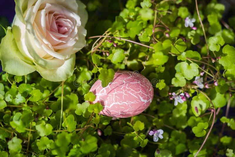 La belle offre a monté avec l'oeuf de pâques rose au soleil photographie stock
