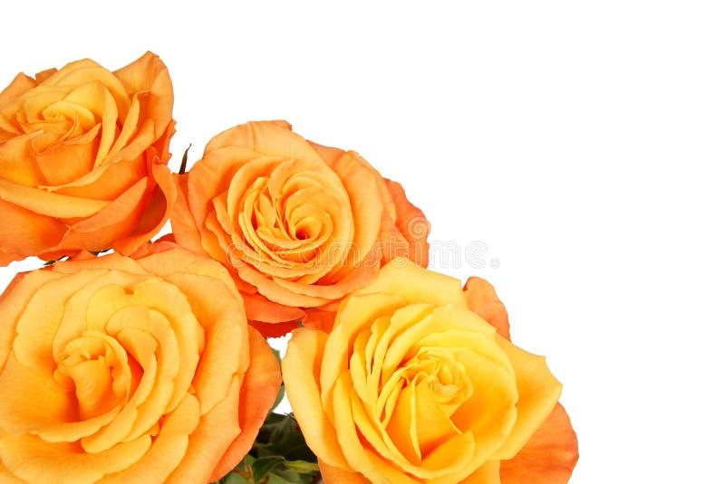 Download La Belle Orange S'est Levée Photo stock - Image du arome, nature: 45359478