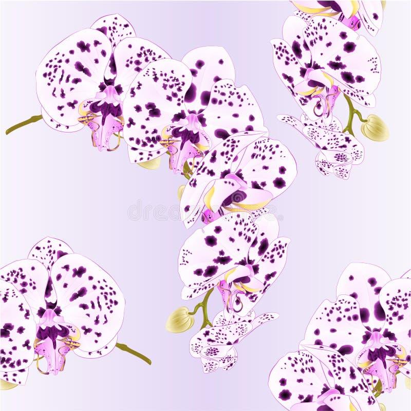 La belle orchidée d'isolement de Phalaenopsis de texture sans couture pointille la tige pourpre et blanche avec des fleurs et des illustration de vecteur