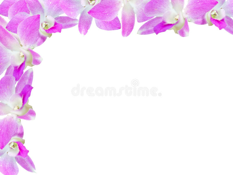 La belle orchidée fleurit le cadre d'isolement sur le fond blanc pour la carte de voeux ou votre conception image stock