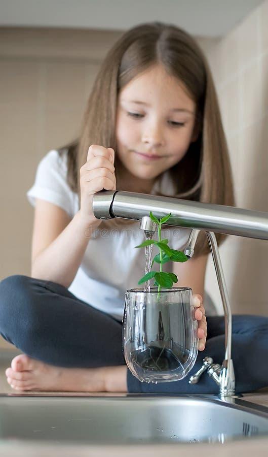 La belle petite fille tient un verre avec le pois pisum sativum, arrosant la jeune plante verte Concept de vacances de jour de te photos libres de droits