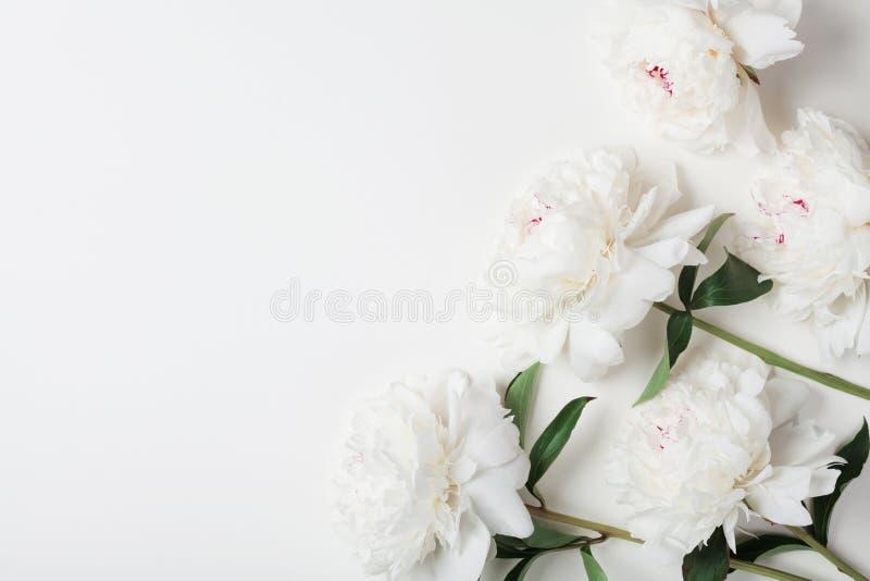 La belle pivoine blanche fleurit le bouquet sur le dessus de table en pastel style plat de configuration photographie stock libre de droits
