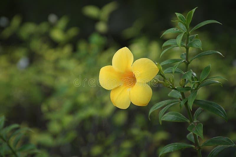 La belle trompette d'or dans la forêt images libres de droits