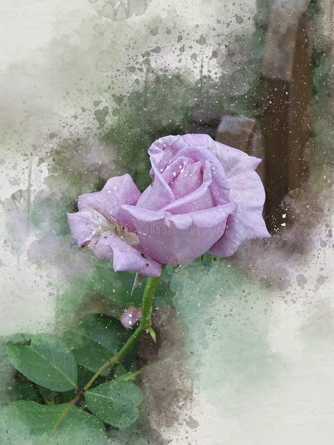 La belle violette peinte par aquarelle a monté illustration stock