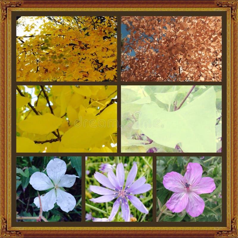 La belleza de la naturaleza foto de archivo