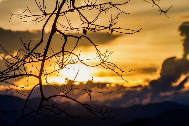 La belleza de las ramitas es cielo de la silueta a la puesta del sol como fondo foto de archivo libre de regalías