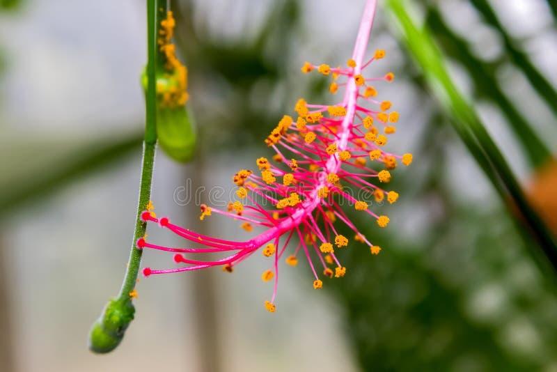 La belleza de los jardines de Kew imagen de archivo