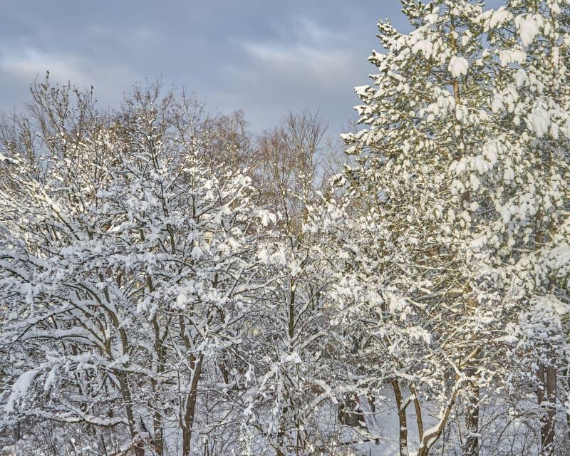 La belleza de la nieve foto de archivo