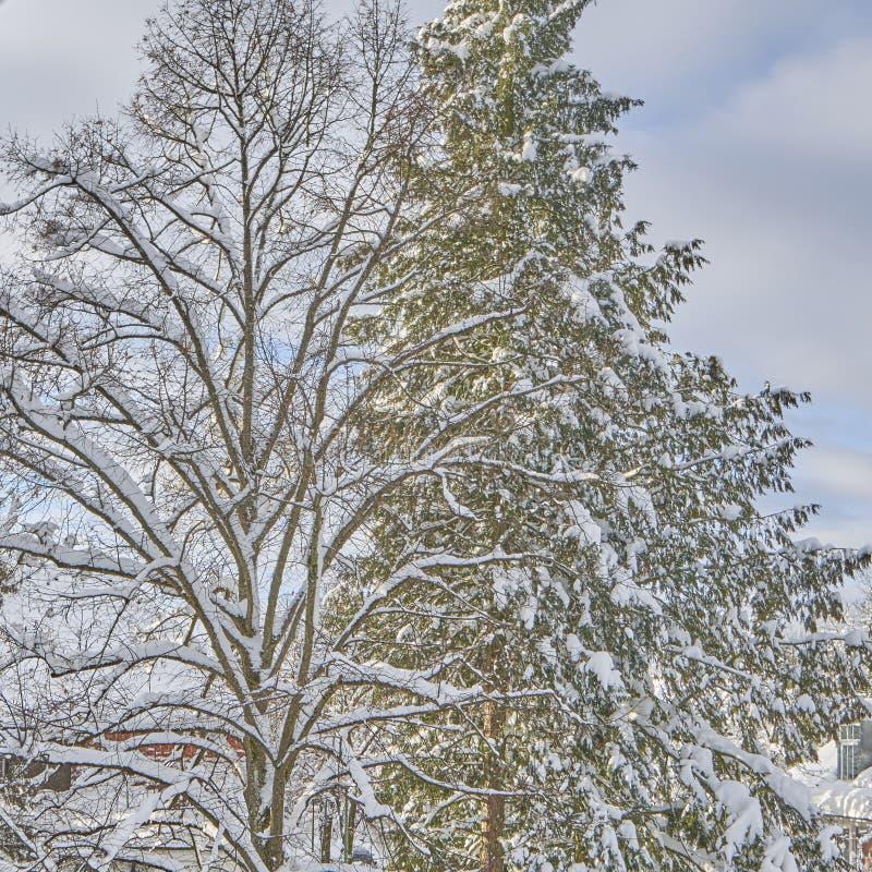La belleza de la nieve imagen de archivo libre de regalías