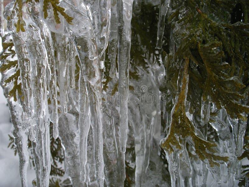 La belleza del hielo después de la lluvia sobrefundida fotografía de archivo