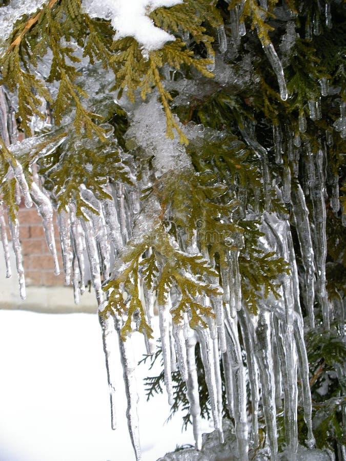 La belleza del hielo después de la lluvia sobrefundida imagen de archivo