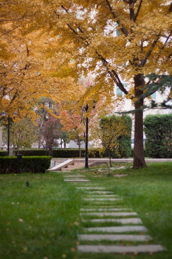 La belleza del otoño imágenes de archivo libres de regalías