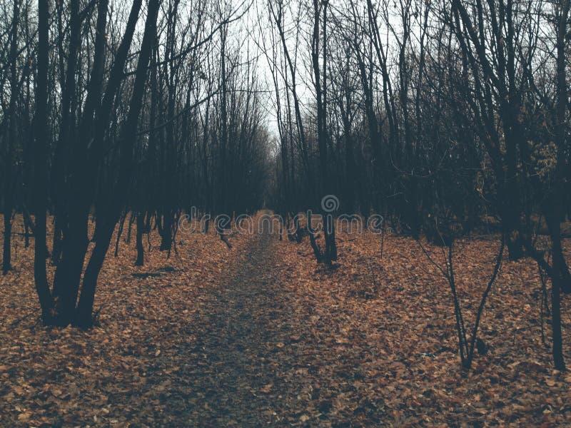 La belleza del otoño está pegando fotografía de archivo libre de regalías