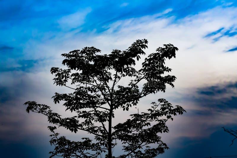 La belleza del papel pintado de la naturaleza que muestra el tym de la puesta del sol junto con el cielo azul y el árbol sombrío  imagen de archivo