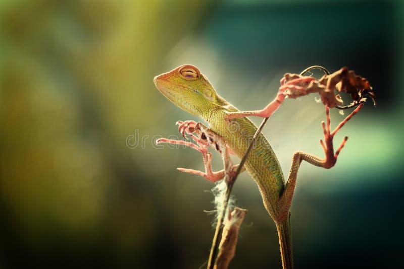 La belleza del sueño de los lagartos fotos de archivo libres de regalías