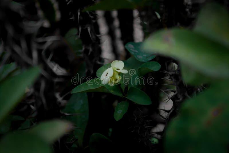 La belleza poca flor fotografía de archivo