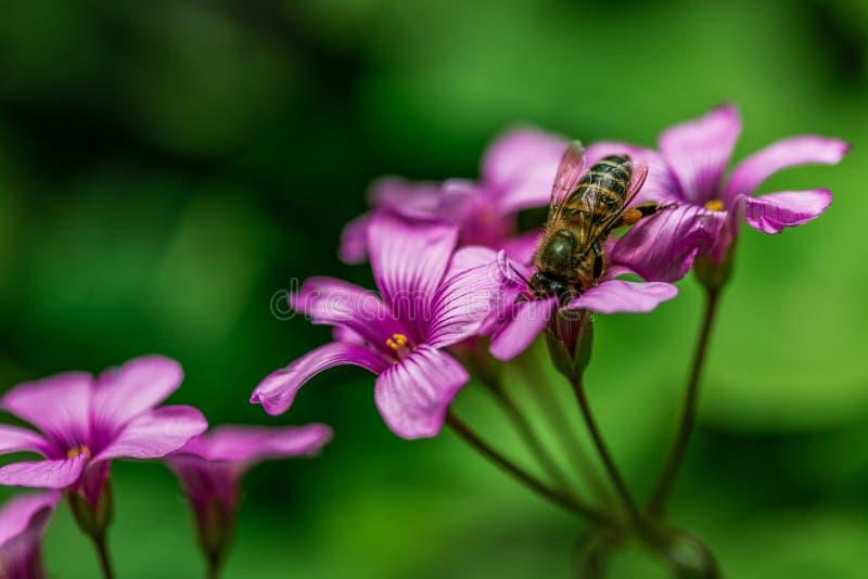 La bellezza del fiore immagini stock libere da diritti