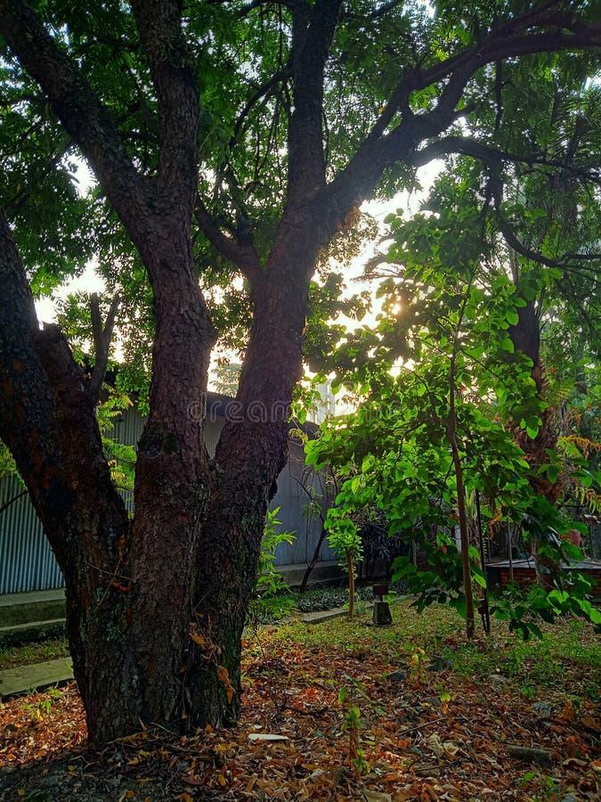 La bellezza del sole ad alba fotografia stock libera da diritti