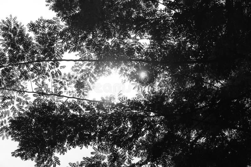La bellezza dell'albero fotografia stock libera da diritti