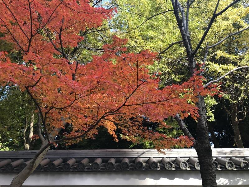 La bellezza della stagione di autunno e dell'architettura giapponese tradizionale fotografie stock