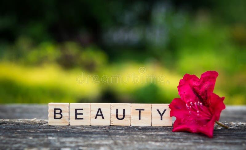 La bellezza di parola, composta delle plance di legno leggere e rhodode rosso fotografia stock libera da diritti