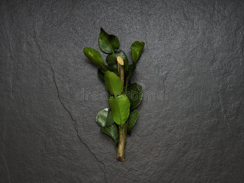 La bergamota, la cal del cafre y el cafre abonan la hoja con cal con la rama en fondo oscuro imagen de archivo libre de regalías