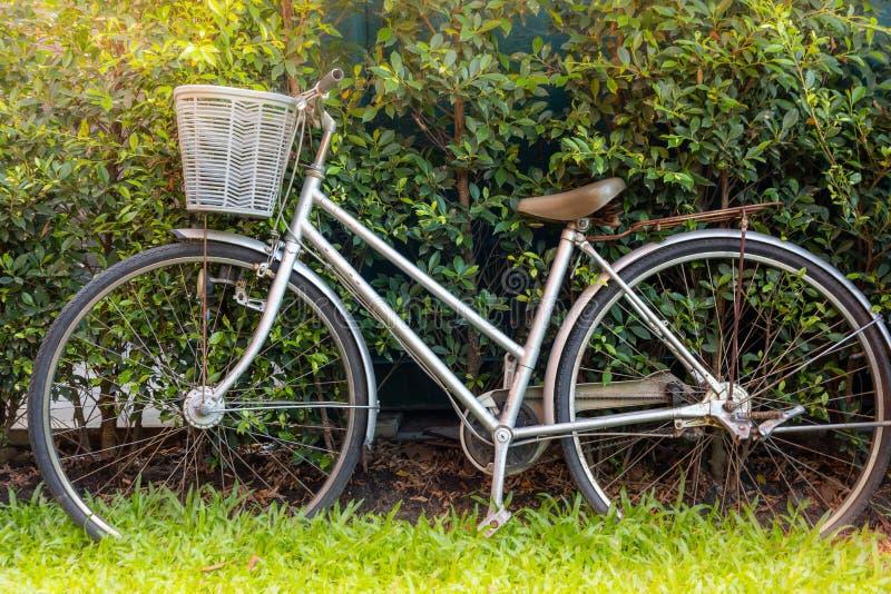 La bicicletta d'annata ha parcheggiato in un erboso ed in un albero verdi in giardino sulla s fotografia stock
