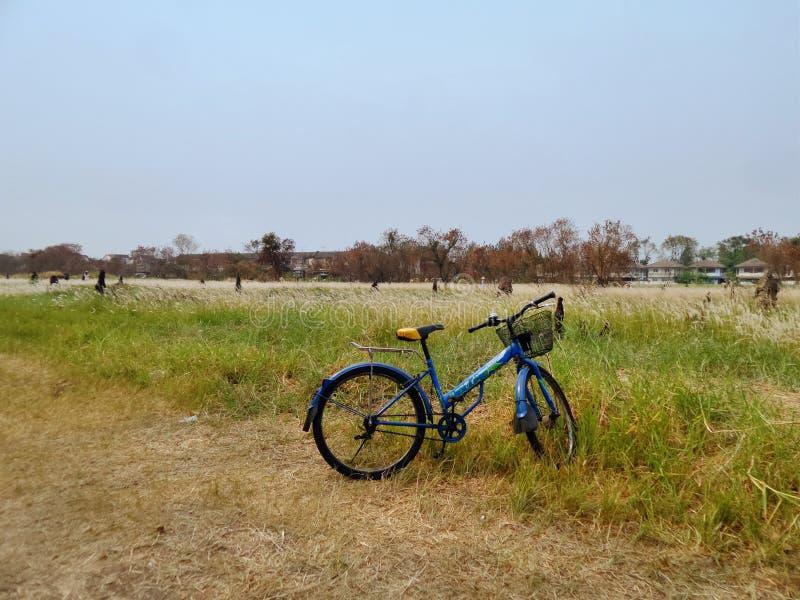 La bicicletta dal lato di bianco ricopre di paglia il giacimento di fiore dell'erba fotografia stock libera da diritti