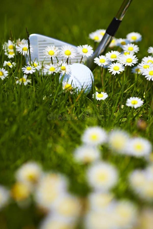 La bille et le club de golf entre la marguerite fleurit sur l'aller photos stock