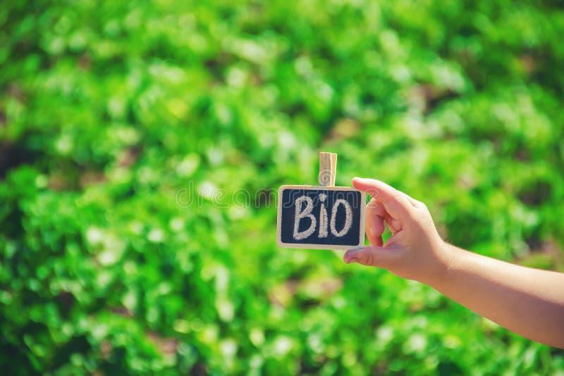 La bio granja firma adentro las manos de un niño imagen de archivo libre de regalías